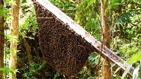 Khám phá sản vật miền Nam Việt Nam (Kỳ 26): ba khía Rạch Gốc, mật ong rừng U Minh, chả trứng mực Cà Mau, cháo trăn sông Trẹm