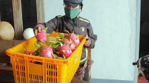 Nông dân Đắk Lắk điêu đứng vì thanh long rớt giá còn 2.000 đồng/kg