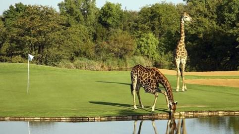 Những sân golf thiên đường ở Nam Phi