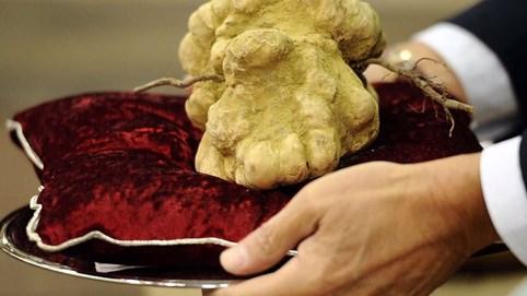 5 cây nấm đắt đỏ bậc nhất hiện nay, ngay cả thịt cá thượng hạng cũng khó sánh bằng: Việt Nam có tới 2 loại góp mặt