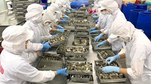VASEP: Doanh nghiệp xuất khẩu có thể mất thêm hàng trăm tỷ vì quy định ghi nhãn hàng hoá