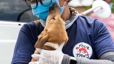 Four Paws đóng cửa một lò mổ cung cấp thịt chó lớn ở Campuchia