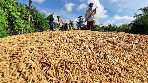 Việt Nam bán nhiều nông sản cho Trung Quốc nhưng chưa hiểu rõ thị trường này