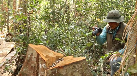 Thủ tướng chỉ đạo kiểm tra, xử lý thông tin hàng ngàn ha rừng tại Lâm Đồng bị mất sau khi vào tay doanh nghiệp