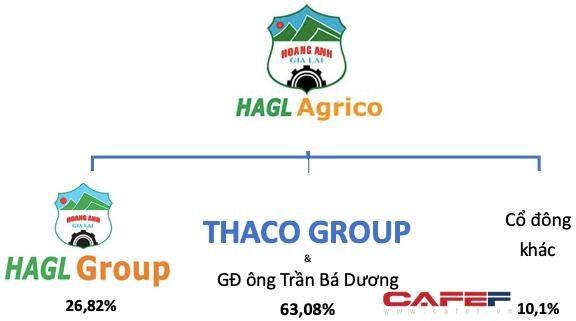 Cơ cấu cổ đông tại HAGL Agrico từ ngày 8/8/2021.