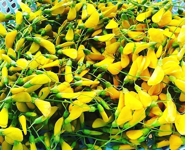 Khám phá sản vật miền Nam Việt Nam (Kỳ 10): bông điên điển, bông súng mắm kho, cá lóc nướng trui, nem Lai Vung - Ảnh 2