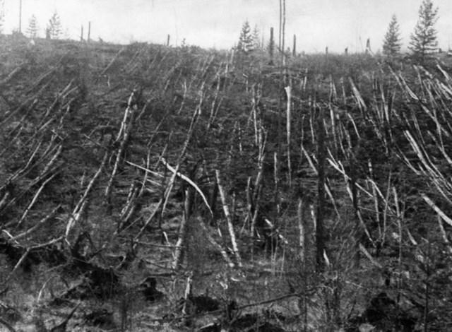 Những thân cây trơ trụi sau vụ nổ.