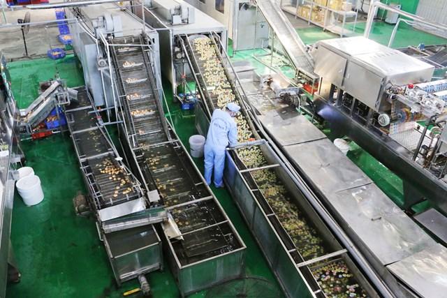Một phần dây chuyền sản xuất của Vietfoods