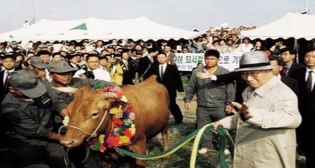 Ông Chung Ju Yung đã dắt một con bò qua biên giới Triều Tiên - Hàn Quốc để trả lại món nợ thuở hàn vi.