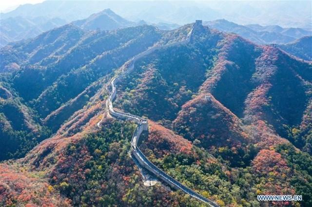 Khung cảnh Vạn Lý Trường Thành chụp ngày 24/10, những vạt rừng bao quanh kỳ quan thế giới đã đổi màu lá mang đậm không khí mùa thu.
