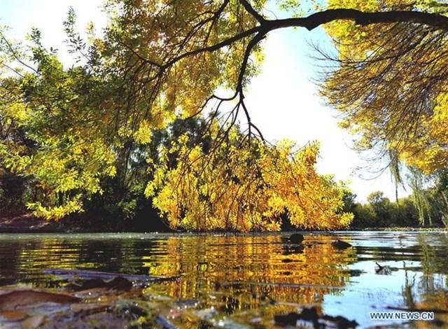 Một góc mùa thu rực vàng ở Công viên Olympic Bắc Kinh chụp vào ngày 22/10.