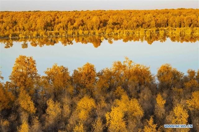 Những hàng gỗ dương soi bóng xuống dòng sông Tarim - khu vực có vị trí thấp nhất của Tân Cương cũng như Trung Quốc. Tân Cương chiếm 1/6 diện tích toàn Trung Quốc, nơi đây có dãy núi Thiên Sơn tách khu tự trị thành 2 bồn địa lớn là Dzungarian và Tarim.