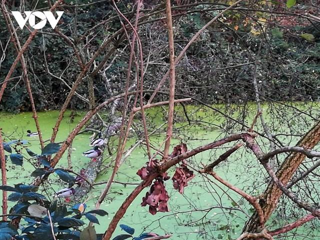 Vẻ đẹp tĩnh lặng của hồ nước trong một khu rừng ở thành phố Antwerp (Bỉ).