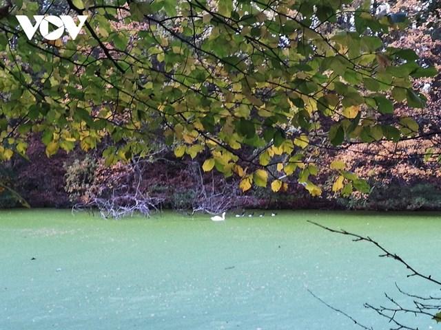 Mặt hồ xanh biếc do bèo phủ kín tạo nên một phong cảnh đẹp như tranh vẽ.
