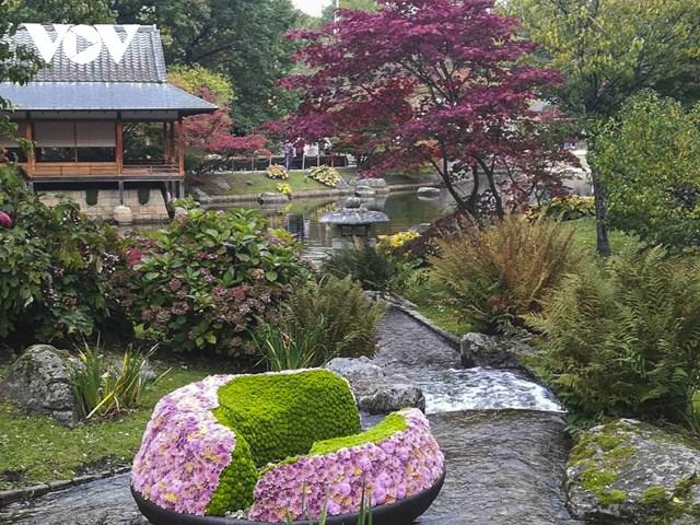 Một góc mùa thu Nhật Bản được tái hiện trong lễ hội hoa cúc được tổ chức tại vườn Nhật Bản ở thành phố Hasselt vào tháng 10/2020.