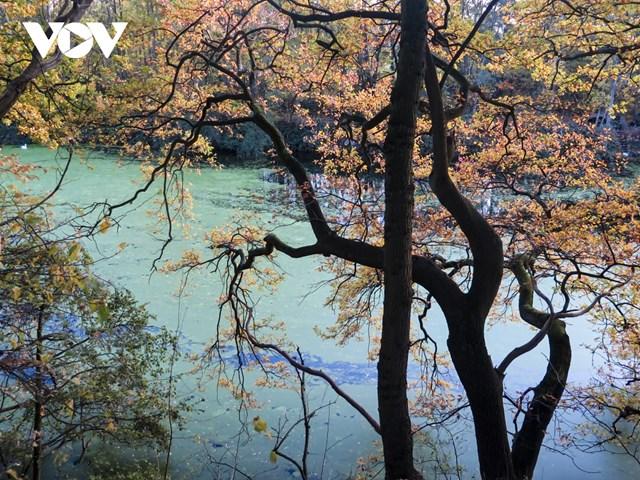 Chiêm ngưỡng phong cảnh mùa thu hữu tình tại Bỉ - Ảnh 1