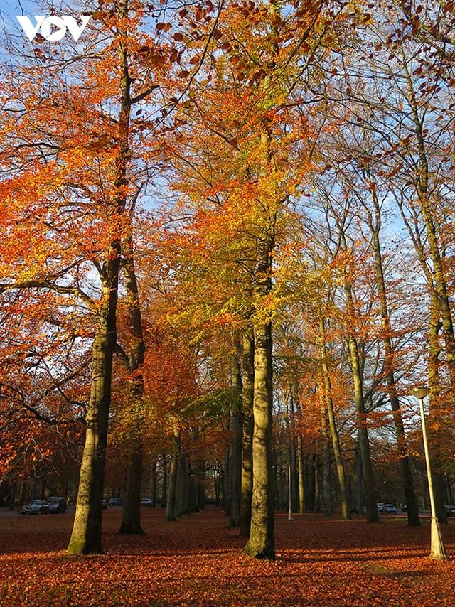 """Ngày ngắn, mưa nắng thất thường và lạnh lẽo đó là những nét đặc trưng của mùa thu tại Bỉ. Tuy vậy, nhiều người vẫn """"phải lòng"""" với mùa thu nơi đây, chính bởi những cảm xúc mà nó đem lại từ sự biến đổi màu sắc của cây cối và tiết trời."""
