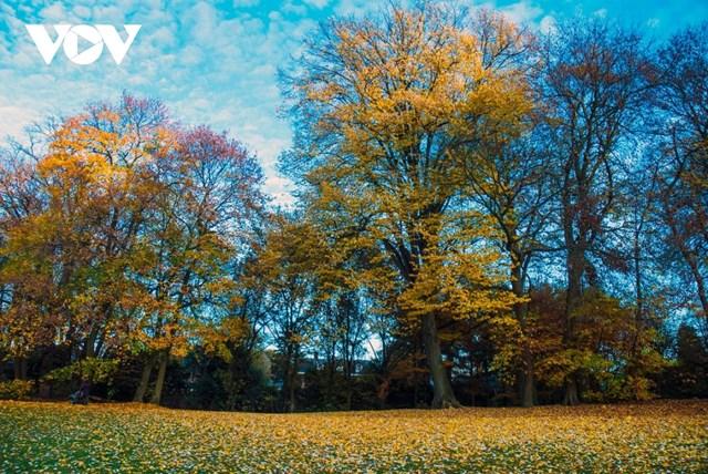 Không rực rỡ và lộng lẫy như những xứ sở vốn được coi là thiên đàng mùa thu: Nhật Bản, Hàn Quốc, Nga..., mùa thu tại Bỉ mang một vẻ đẹp rất riêng, đến chậm rãi, nhẹ nhàng song không kém phần quyến rũ.
