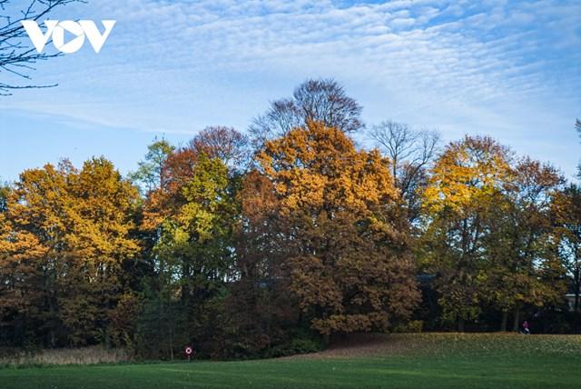Bắt đầu từ 21/9 và kết thúc vào ngày 20/12, mùa thu lạnh lẽo tại Bỉ không u ám hay đơn điệu nhờ những gam màu ấm áp của cây cối.