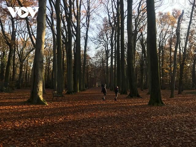 Phố phường, các công viên, cánh rừng... dường như được khoác lên những chiếc áo mới khi lá cây chuyển sắc từ xanh sang đỏ, cam hay vàng, nâu.