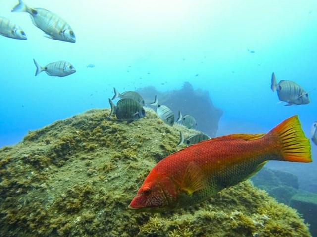 Hệ sinh thái dưới nước cũng rất phong phú, phù hợp với những ai đam mê bơi lặn.