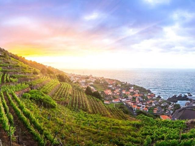 Trên đảo có một loại rượu vang cũng mang tên Madeira, nổi tiếng với hương vị hảo hạng và khác biệt. Du khách có thể mua tour tham quan vườn nho và nếm thử rượu.