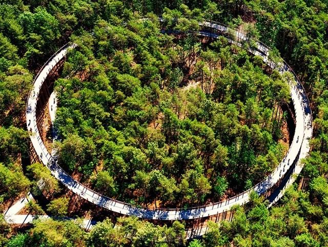 Dự án cơ sở hạ tầng tốt nhất gọi tên công trình đường đạp xe xuyên cây ở Bosland. Công trình này nằm trong khu bảo tồn thiên nhiên Pijnven gần thị trấn Bosland, Bỉ với con đường uốn lượn thành vòng tròn kép dài 700m.
