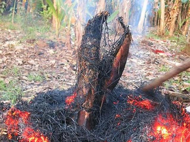 Khám phá sản vật miền Nam Việt Nam (Kỳ 10): bông điên điển, bông súng mắm kho, cá lóc nướng trui, nem Lai Vung - Ảnh 3