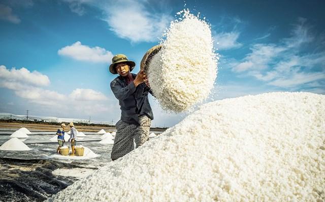 Khám phá sản vật miền Nam Việt Nam (Kỳ 25): gạo Một bụi đỏ Hồng Dân, muối, dừa nước và bồn bồn Bạc Liêu - Ảnh 1