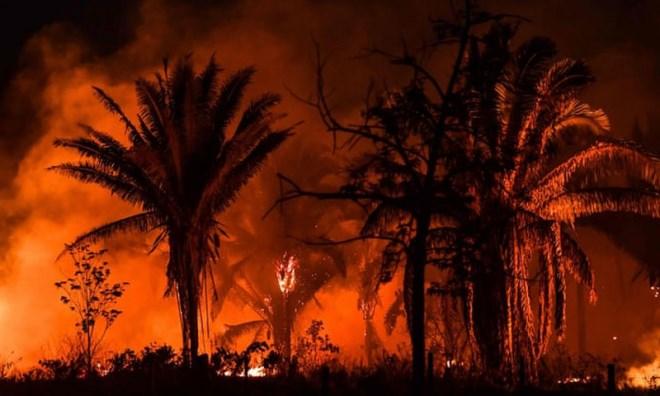 TT Brazil cáo buộc tài tử DiCaprio tài trợ đốt rừng Amazon - Ảnh 1
