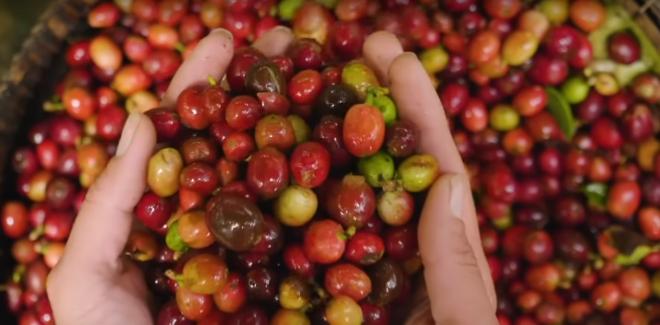"""Ít tiền nhưng khẩu vị mạnh, người Việt khiến Starbucks """"xây xẩm"""" ở thị trường trị giá 1 tỷ USD - Ảnh 8"""