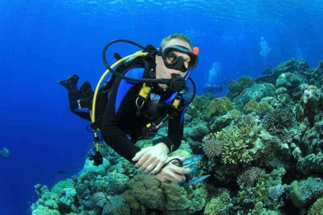 """Vô tư sờ vào san hô khi lặn biển Nha Trang: Hành động tưởng vô hại nhưng đang """"bức tử"""" cả san hô và hệ sinh thái - Ảnh 4"""