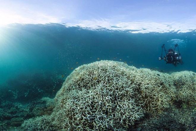 """Vô tư sờ vào san hô khi lặn biển Nha Trang: Hành động tưởng vô hại nhưng đang """"bức tử"""" cả san hô và hệ sinh thái - Ảnh 5"""